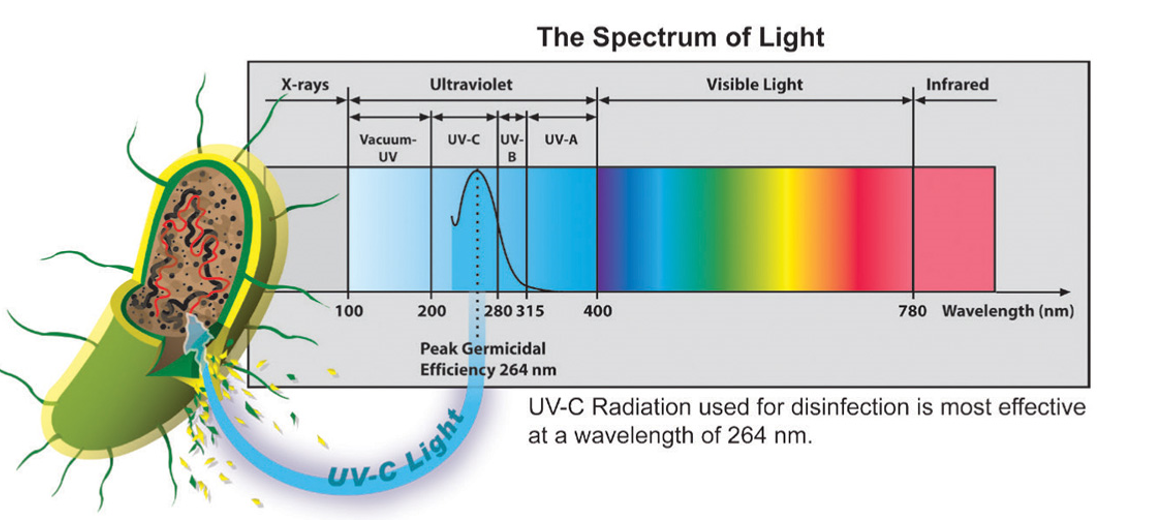 Light Spectrum - UV Cleaning